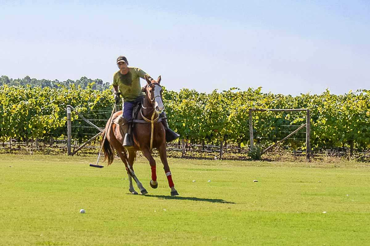 chile wine polo pony