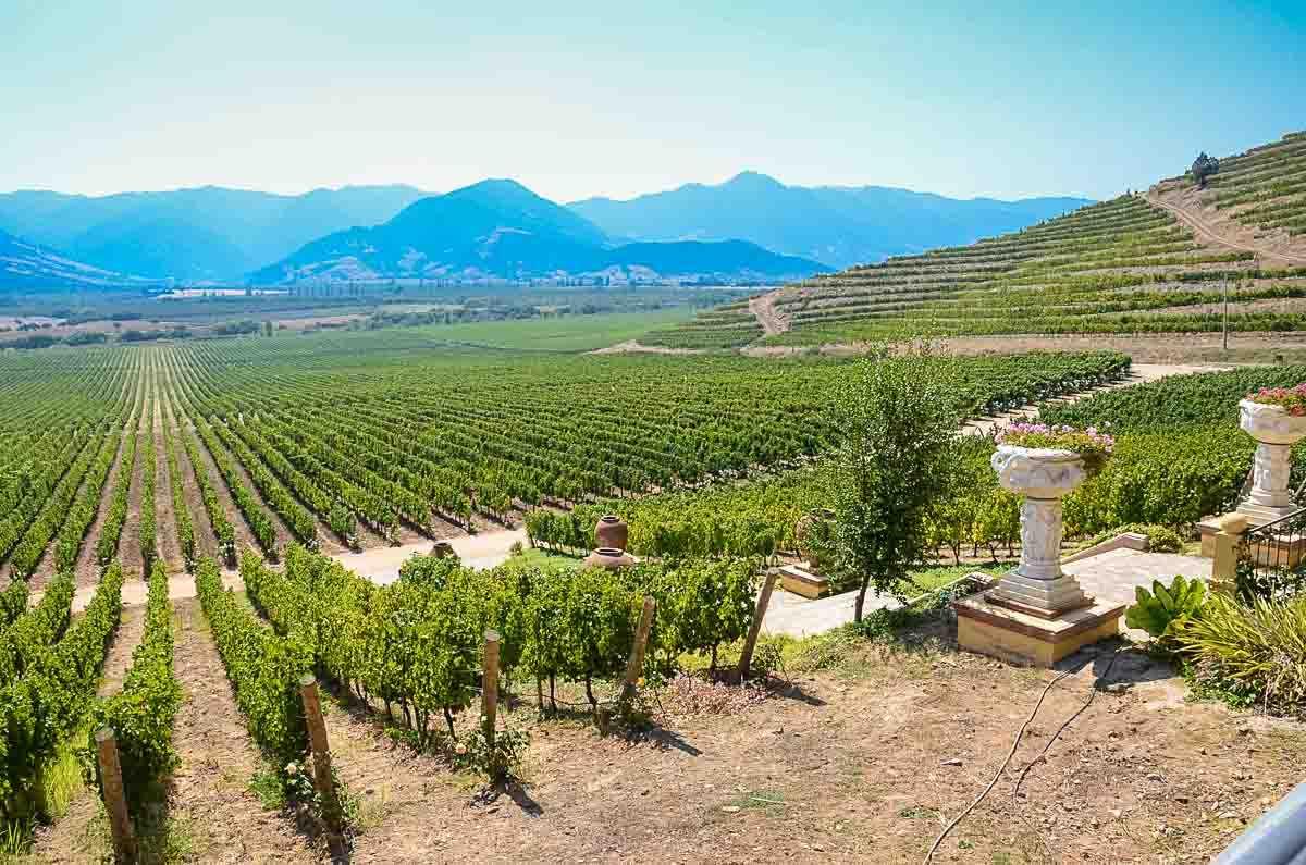 chile wine vineyard