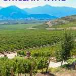 Chilean wines and tours in the central valley