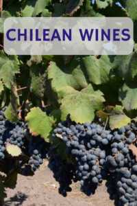 Carmenere grapes and Chilean Wine