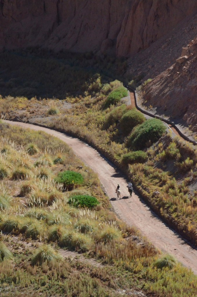 current residents Atacama Desert