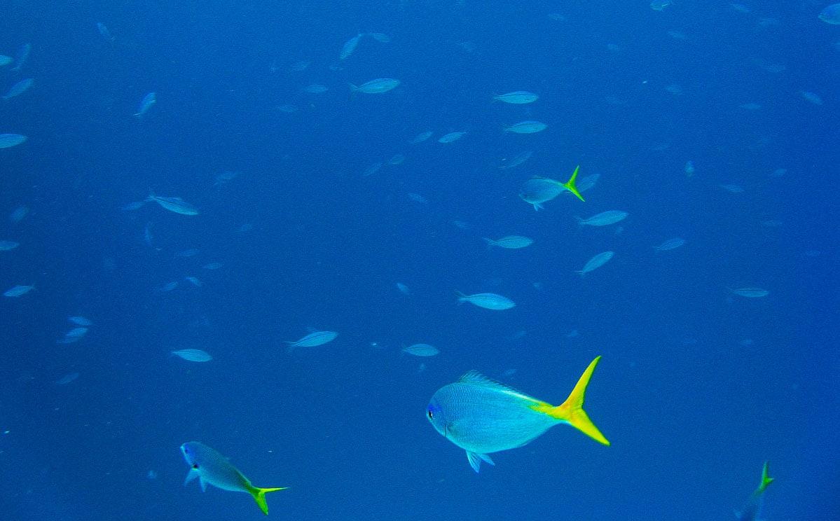 Australia Great Barrier Reef 11