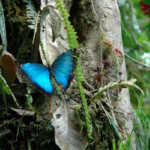 Images from the Mindo Cloud Forest, Milpe, Ecuador