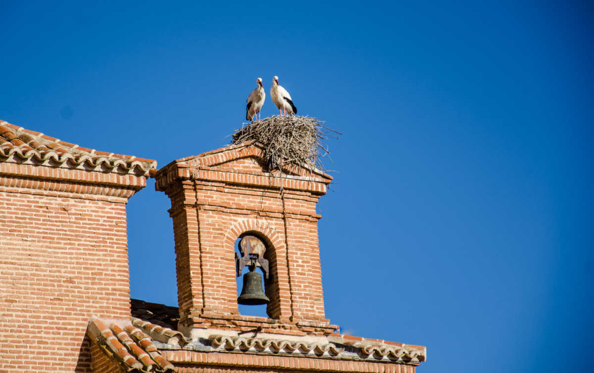 storks alcala de henares spain unesco world heritage day trip from madrid