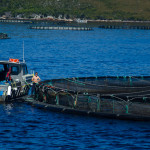 Fish Farming, Macquarie Harbour, Strahan, Tasmania