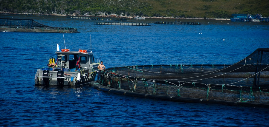 fish farming mcquarie harbor tasmania