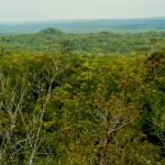 View of the Jungle, El Mirador, Guatemala