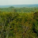 View of the Jungle, El Mirador, Guatemala