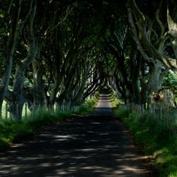 dark hedges near ballymoney northern ireland