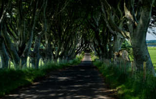 dark hedges near ballymoney northern ireland