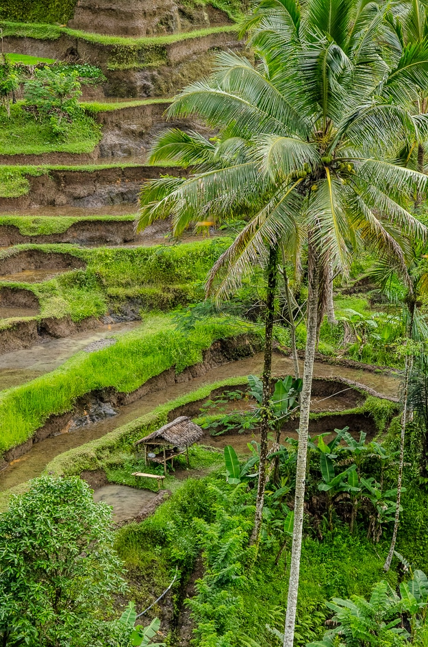 Bali rice terraces, managed through the water districts' temples subak system