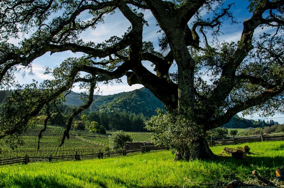 jack london ranch california