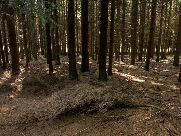 bastogne Jack's wood