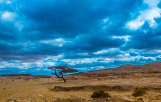lone tree sinai desert egypt color