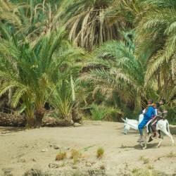 donkey riders nile cruise egypt