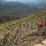 Priorat: Spain's Other Wine Region
