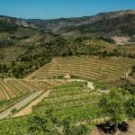 Mountainside Vineyards, Priorat, Spain