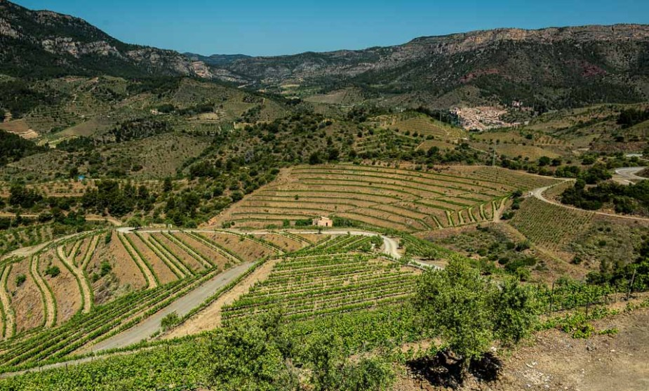 mountainside vineyards priorat catalunya spain
