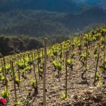 Priorat: Spain's Other Wine Region