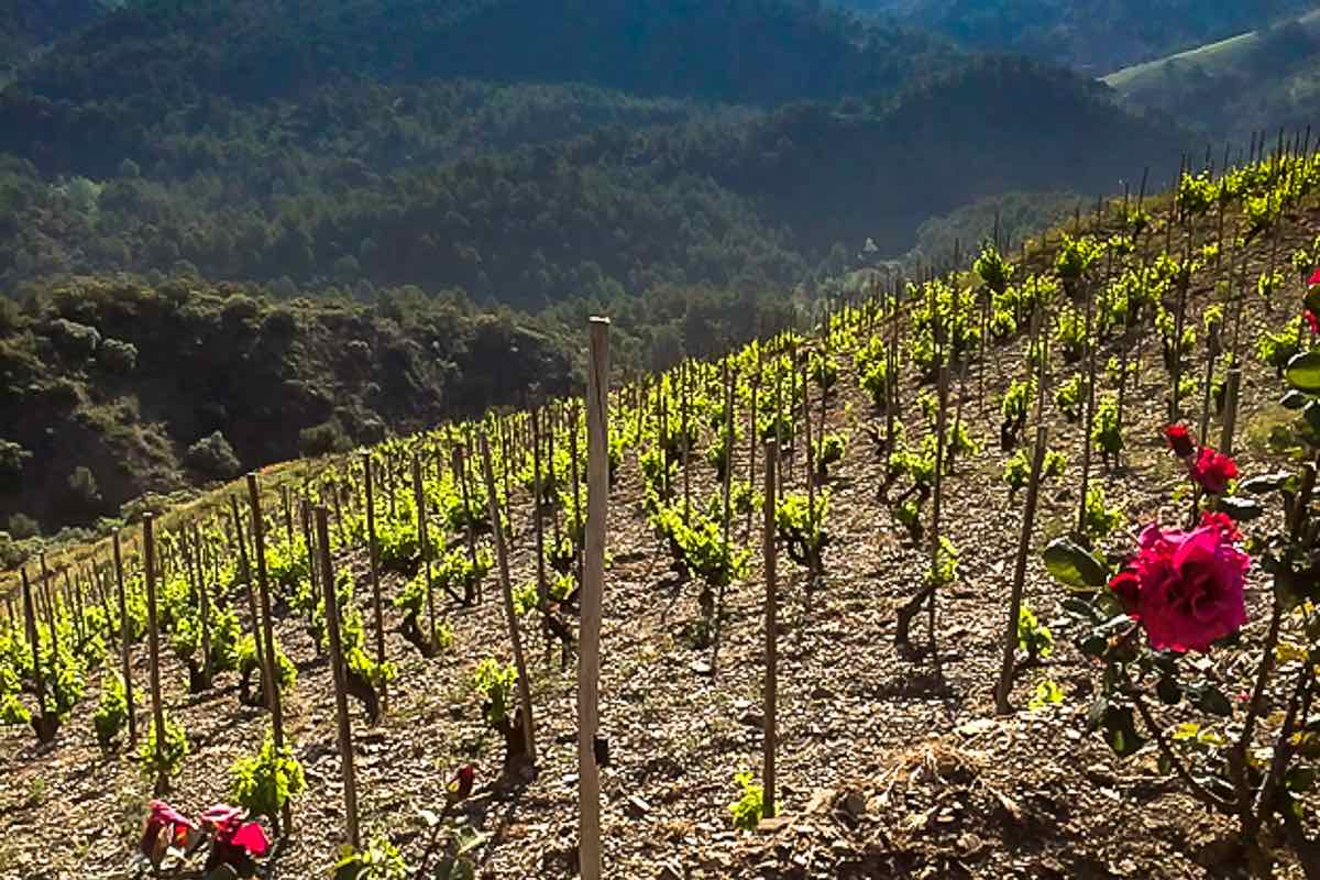 Priorat Spain's other wine region