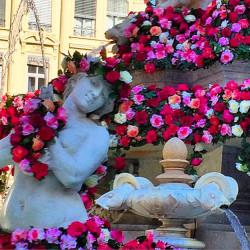 Rose festival in Lyon, France