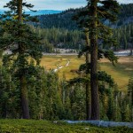 Meadow, Lassen Volcanic National Park, California
