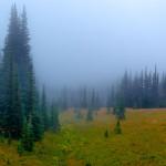 Fog, Mount Rainier National Park, Washington