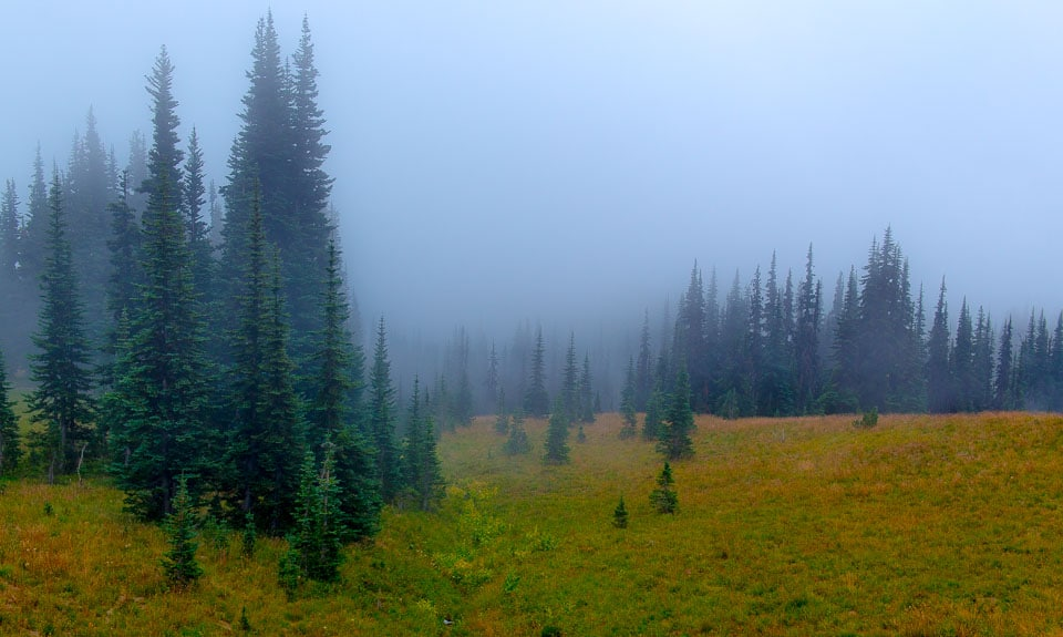 trees in fog Mount Rainier National Park