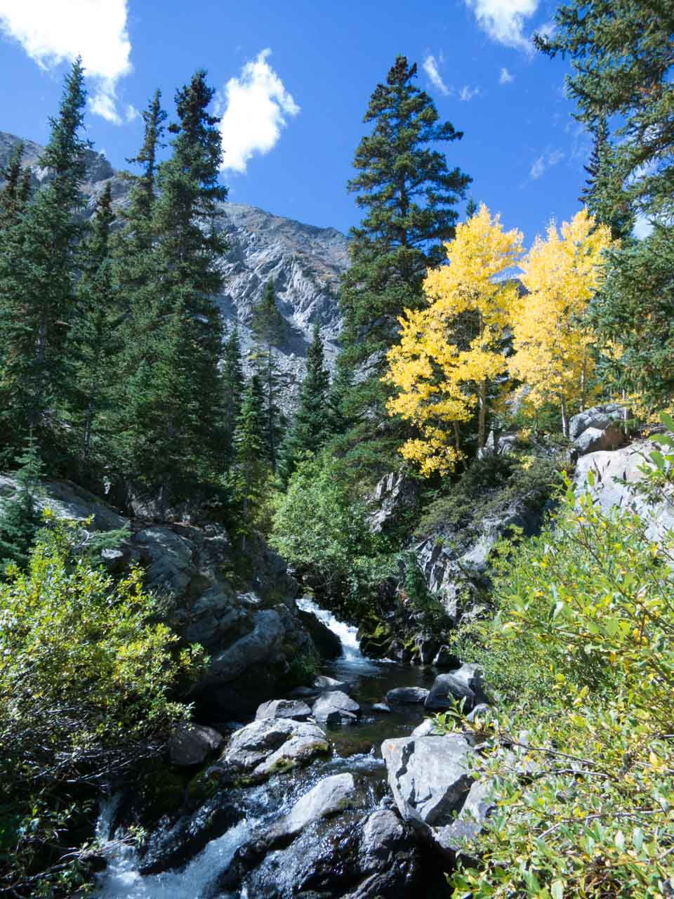 The trailhead begins at about 11,000 feet, just below the treeline with this picturesque assortment of pine and aspen.