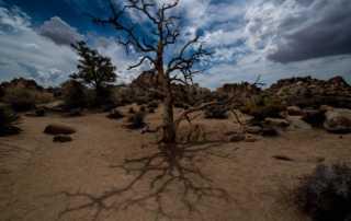 hidden canyon joshua tree national park