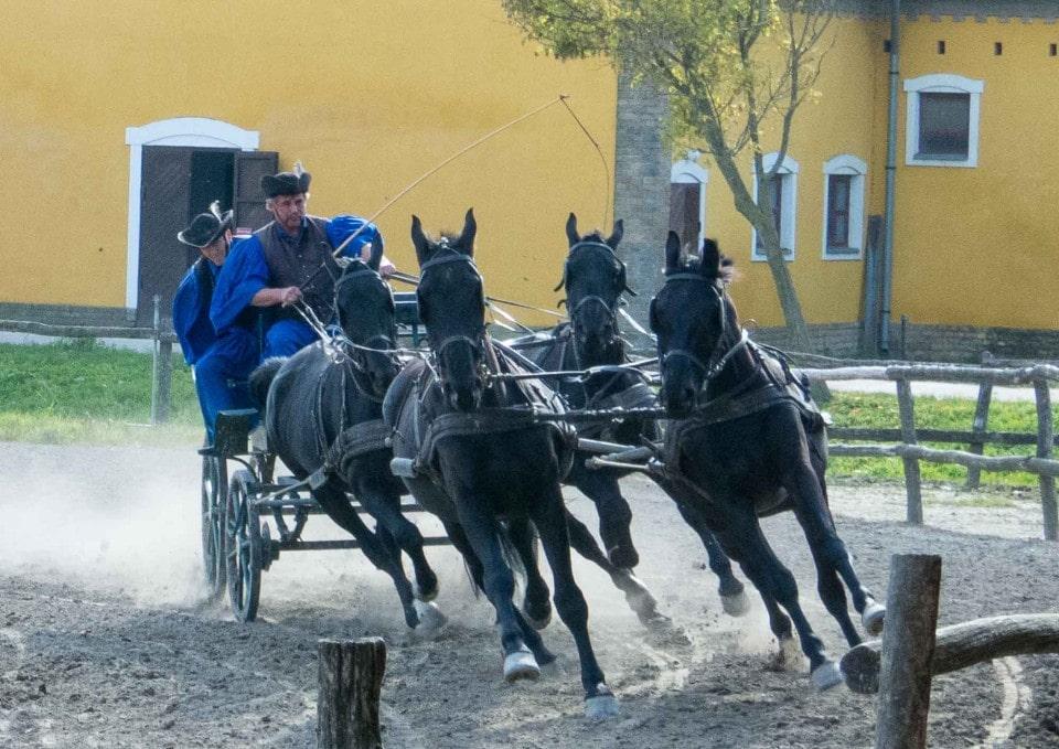 Bakod Puszta Equestrian Center, Kalocsa, Hungary