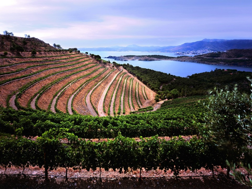 Vineyards of Costa Brava