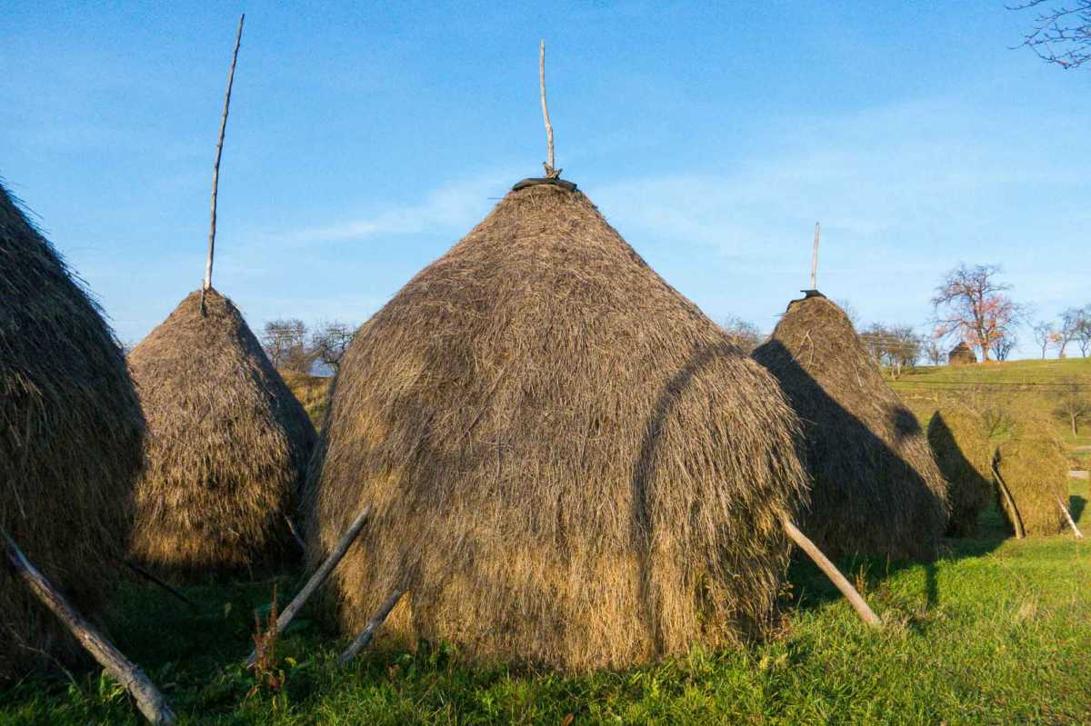 These haystacks In the little village of Plopsi, next to one of the tall-spired wooden churches of Maramures Romania, are typical of the region.