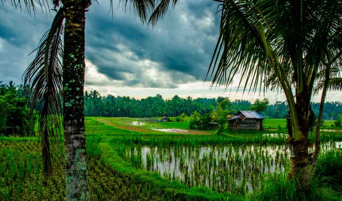 rice field sunset image bali