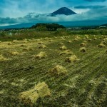 Rice Harvest, Mount Fuji, Japan