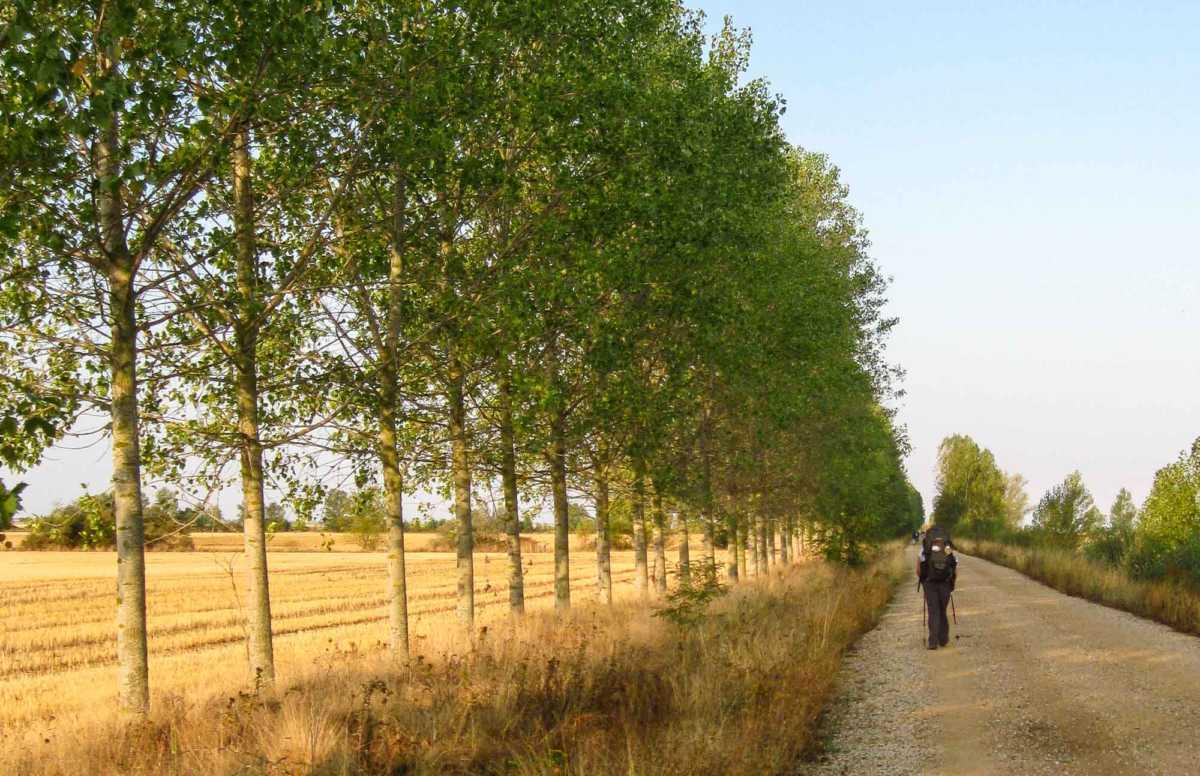 Walking Tour Camino de Santiago