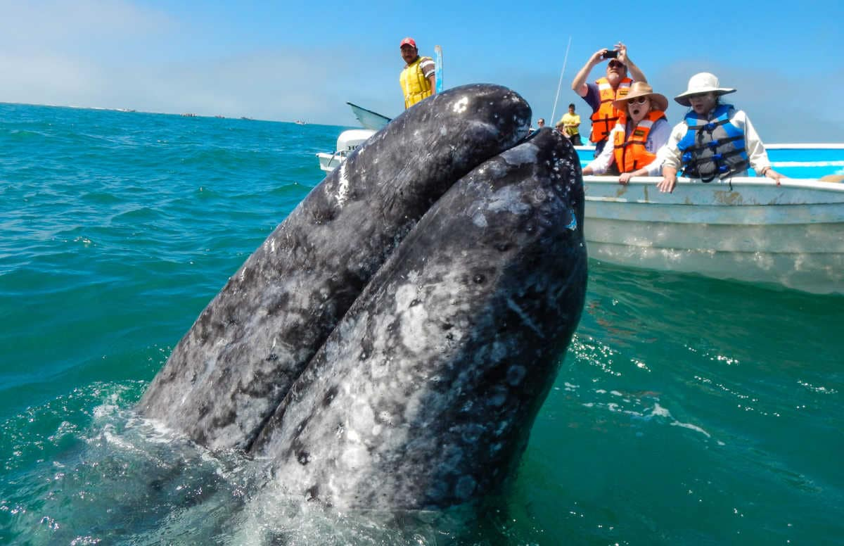baja cruise Sea of Cortez Whale Watching
