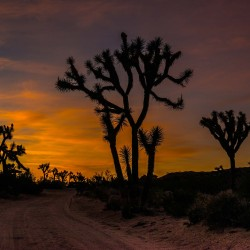 desert sunset joshua tree