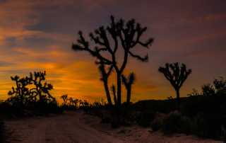 desert sunset joshua tree