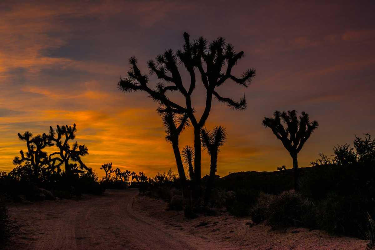 desert sunset joshua tree national park