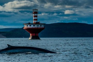 whale lighthouse saint lawrence 3