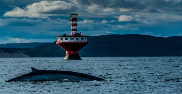 whale lighthouse saint lawrence 3