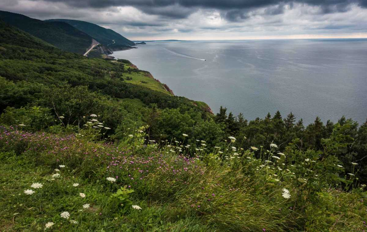 cabot trail overlook wildflowers boat cape breton