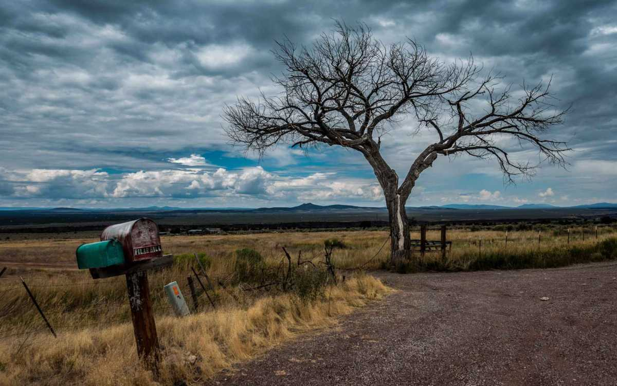 tree mailbox near Taos NM