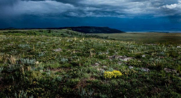 yellow flowers horse mesa ranch nm