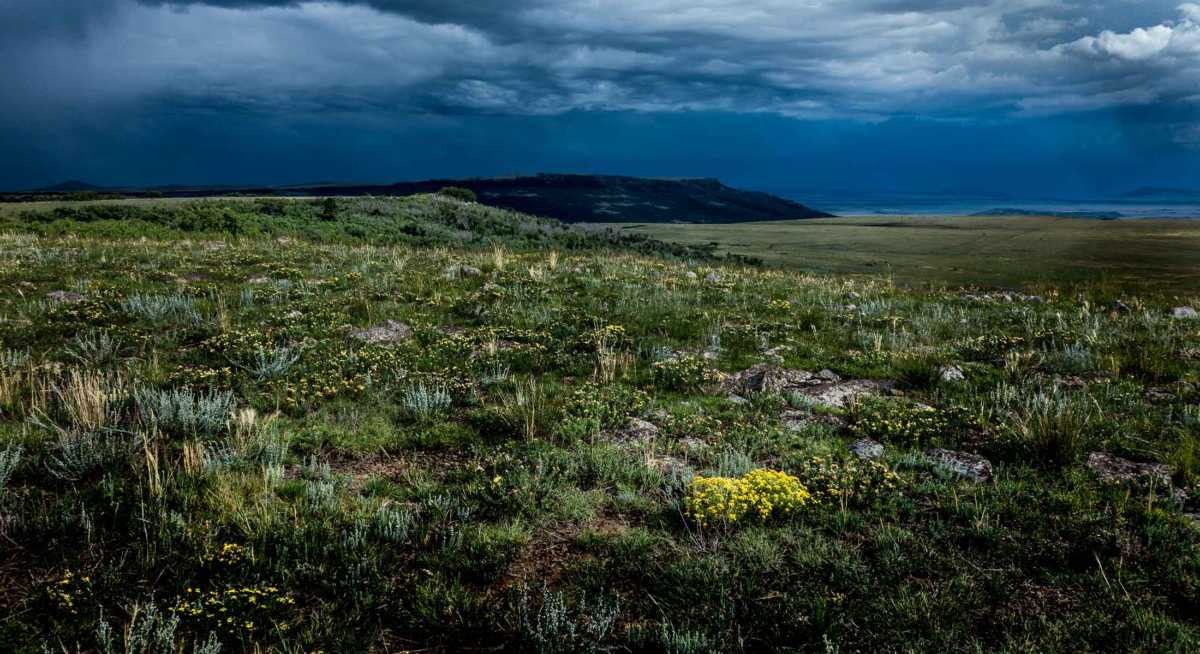 Yellow Flowers, Horse Mesa Ranch, Raton, New Mexico - Travel Past 50