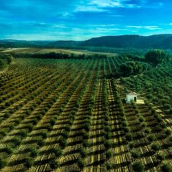 olive-groves-andalucia-from-train-2