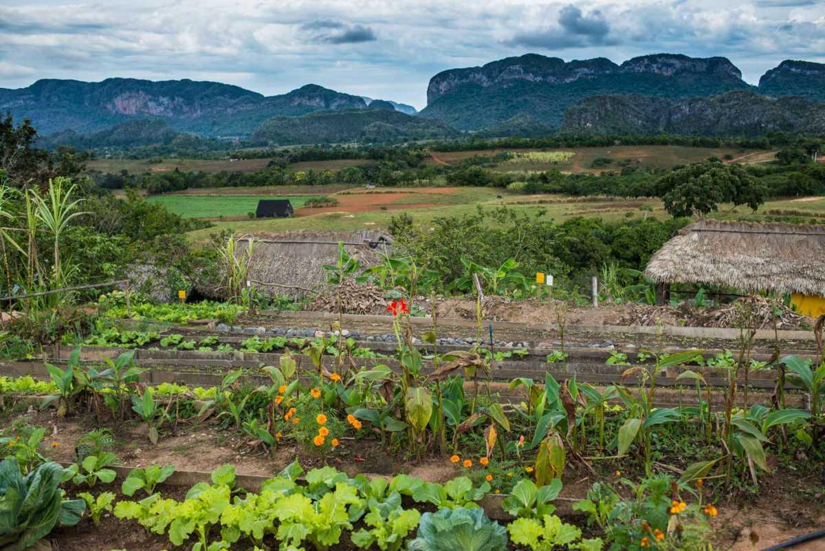 garden paradiso restaurant vinales