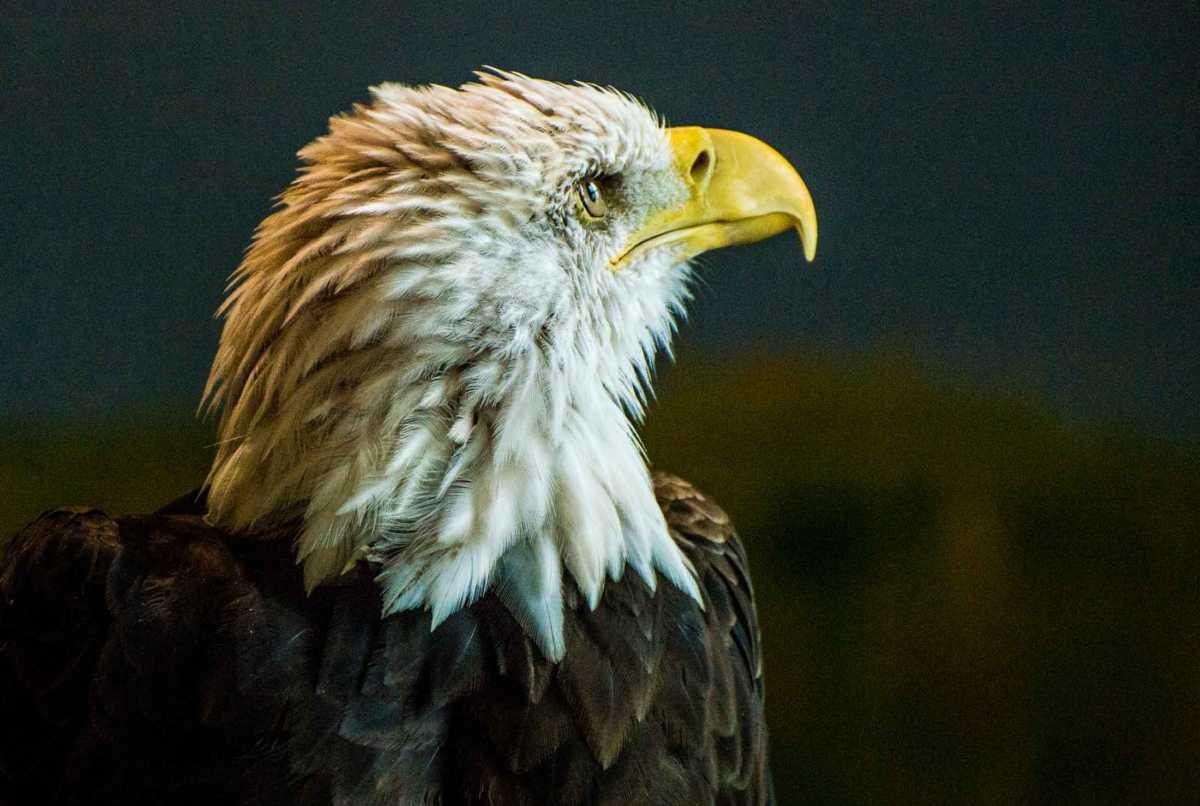 national eagle center wabasha minnesota