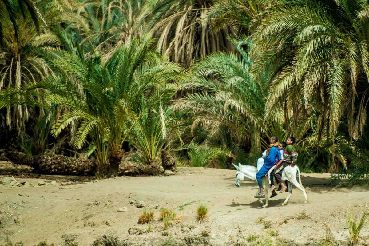 three on a donkey nile river egypt